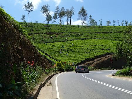 Imagini Sri Lanka: Plantatii ceai Ceylon