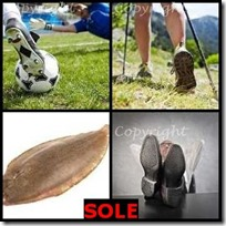 SOLE- 4 Pics 1 Word Answers 3 Letters