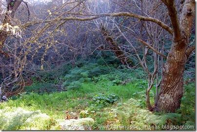 4880 Las Lagunetas-Los Arbejales
