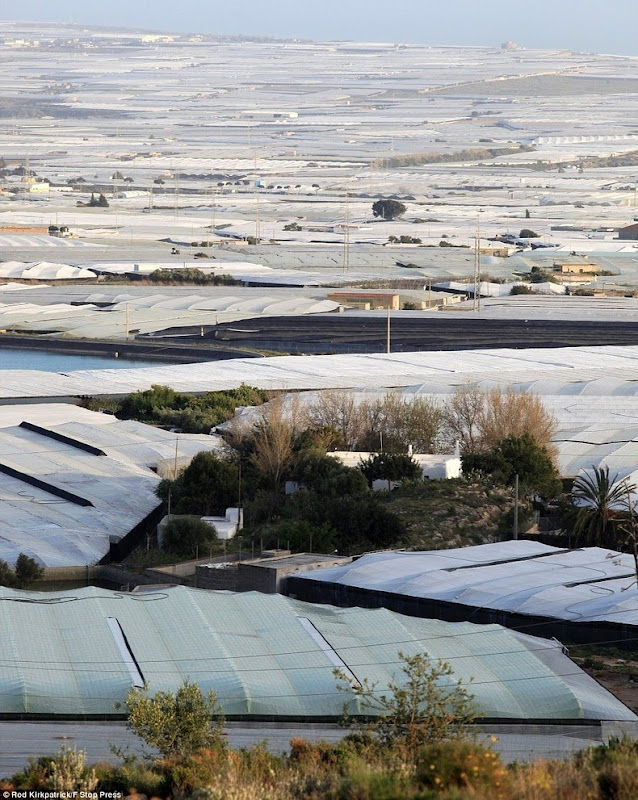 greenhouses-almeria-8