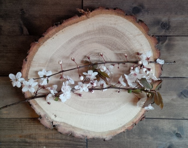 wood slice and blossom