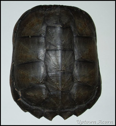 The Uptown Acorn Turtle Shell Installation