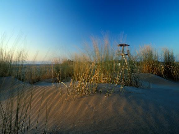 Delta de l'Ebre, Parc NaturalPlatja de Riumar,Deltebre, Baix Ebre, Tarragona2004.07