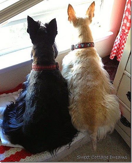 Doogie and Fee at Window