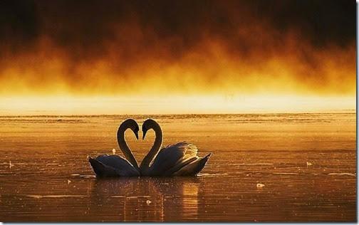 2 corazones blogdeimagenes com (24)