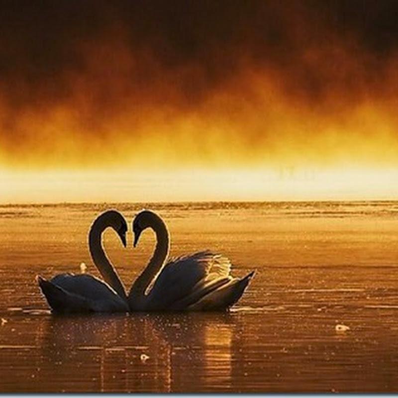 Imágenes con corazones, parejas y amor