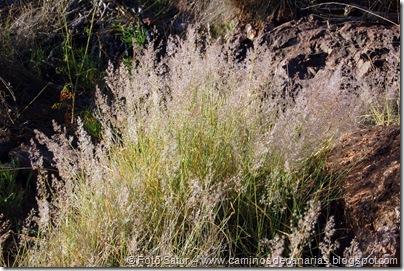4865 Andenes de Tasarte(Cerrillo blanco)
