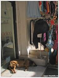 Собаки в Афинах