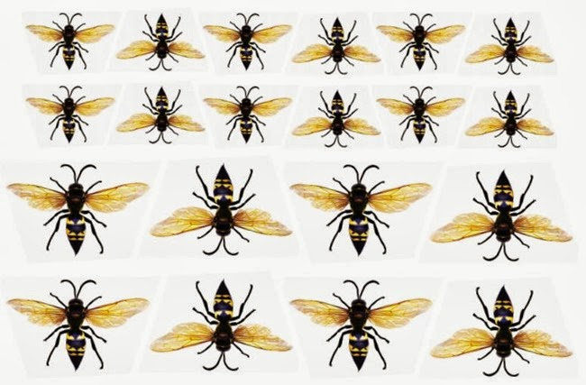 Martha Stewart Wasps Template