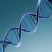 DNA2PROTEIN