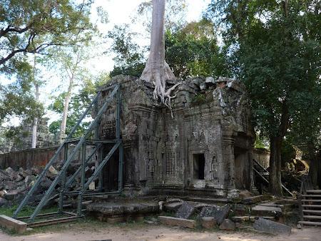 Obiective turistice Angkor: pietre si copaci la Ta Phrom