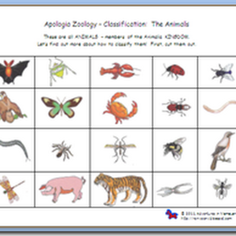 Printable Worksheets rosh hashanah worksheets : Apologia Zoology 1: Sorting/Classifying Printable Worksheets ...