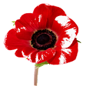 Poppy Fun- Live Wallpaper icon