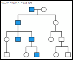 pedigree chart Y linked trait