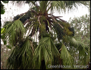 GreenHouse, Yercaud
