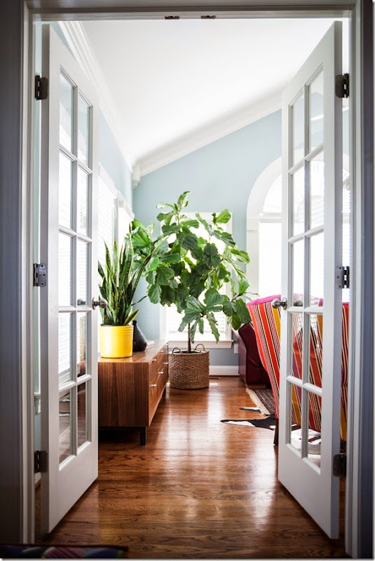 How I Care for My Fiddle Leaf Fig(Ficus Lyrata) - design addict mom