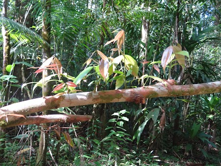 07. Planta crescand pe trunchi.JPG