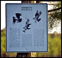 05 - Past the Osprey Sign