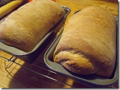 Fresh Bread Hot from Oven