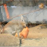 Kleiner Mara