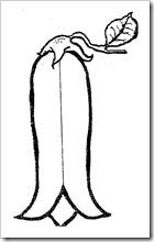 chile copihue (1)