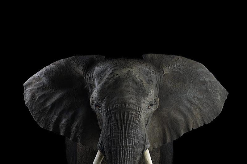 animal-photography-affinity-Brad-Wilson-elephant-1.jpeg