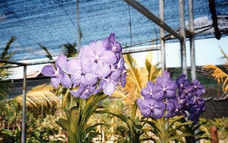164. orhidee.jpg