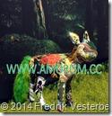 DSC00817.JPG räv djur konstverk textil skulptur och fotografi Närkontakt. Av Annika Eriksdotter på Liljevalch 2014 kompletterad av Fredrik Vestererg och med amorism