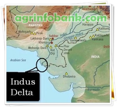 10,000 cusecs of fresh water released into Indus Delta | Agriculture on new guinea on map, yellow sea on map, andaman sea on map, sumatra on map, persian gulf on map, the alps on map, ganges on map,