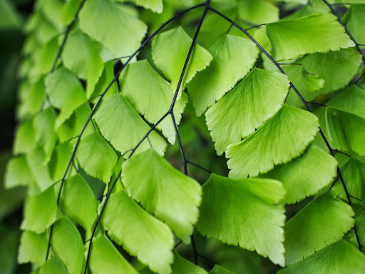 [写真]温室の中の熱帯植物(1)