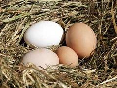 Uova galline ruspanti deposte sulla paglia (quattro)(picc)