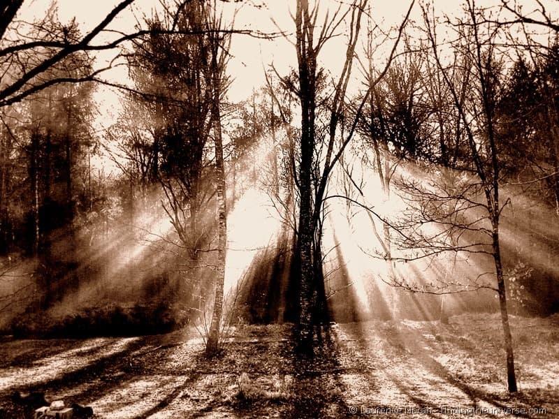 Tree smoke light