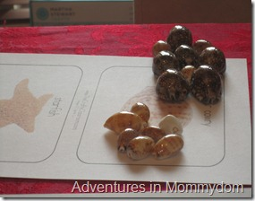 sea shell identification activity