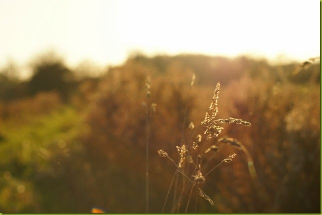 50mm lens in the golden hour
