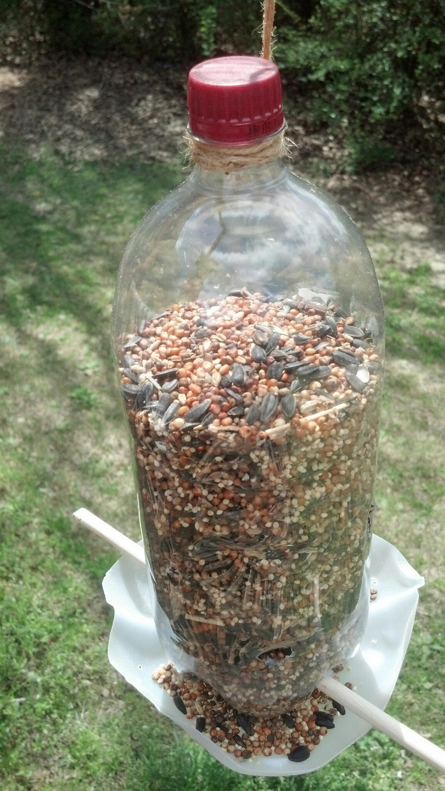 Homemade Bird Feeders Images & Pictures - Findpik