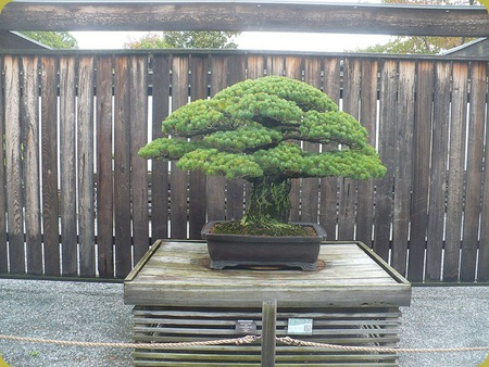 National Bonsai penjing Museum1