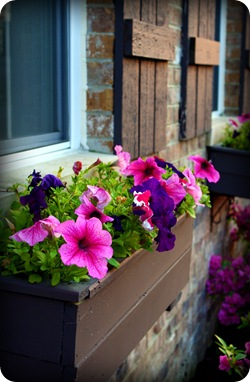 brown window boxes