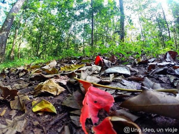 Kerala-Thekkady-Periyar-National-Park-unaideaunviaje.com-KeralaBlogExpress-10.jpg