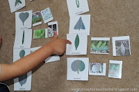 Sorting leaves and leaf BINGO game