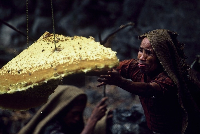 honey-hunters-nepal-9