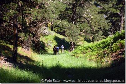 8156 Volcán Hondo Fagajesto(Hoya de los Helechos)