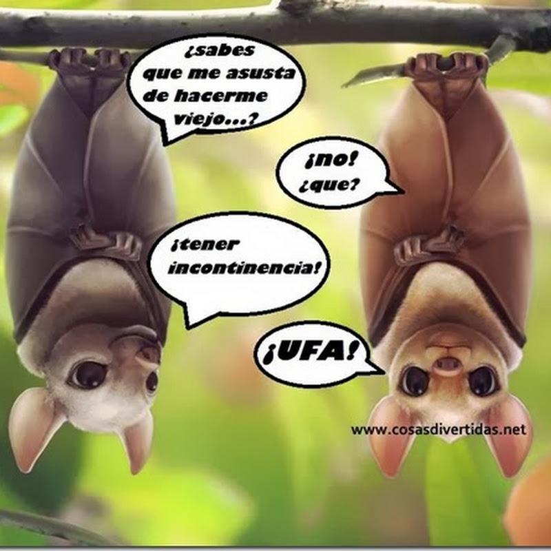Humor: murciélagos y temor a la vejez