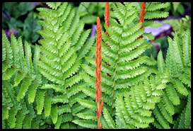 04v8 - Flowers - Ferns