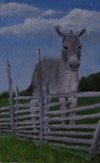 A Donkey for Stubbornness