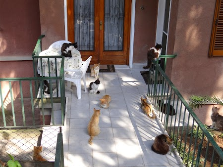 36. Expozitie pisici.JPG