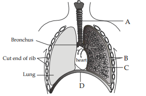 NEET Biology: Medical Entrance Biology Questions and