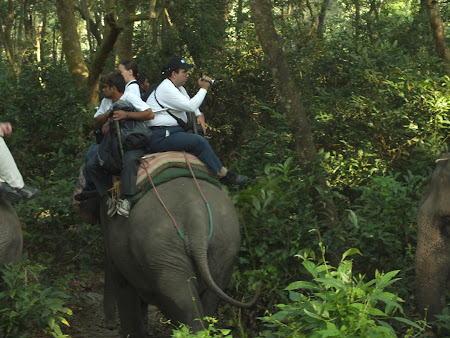 Safari cu elefanti in jungla