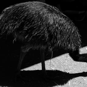 'Decisive Moment by Vesna  Podkrajac - Black & White Animals (  )