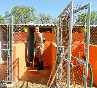 Volunteering at Animal Shelter in Mexico