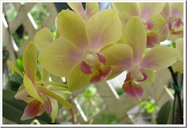 03-14-unkn-bday-orchid2